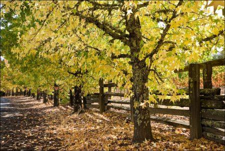 ورق شجر متساقط فصل الخريف بالصور (3)