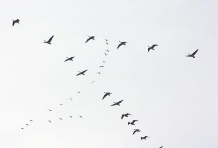 احلي صور الطيور المهاجرة (1)
