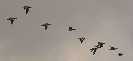 احلي صور الطيور المهاجرة (2)