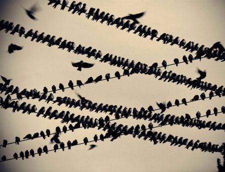 احلي صور الطيور المهاجرة (3)