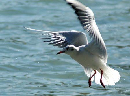 البوم طائر النورس (2)