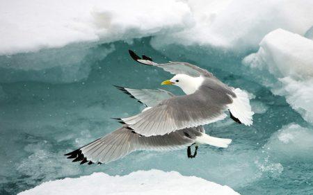 خلفيات طيور النورس (2)