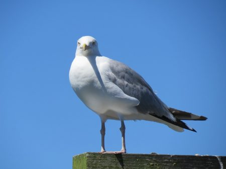 خلفيات طيور (1)