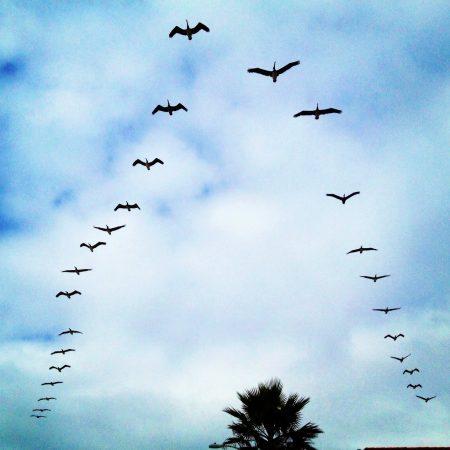 خلفيات وصور طيور مهاجرة (1)