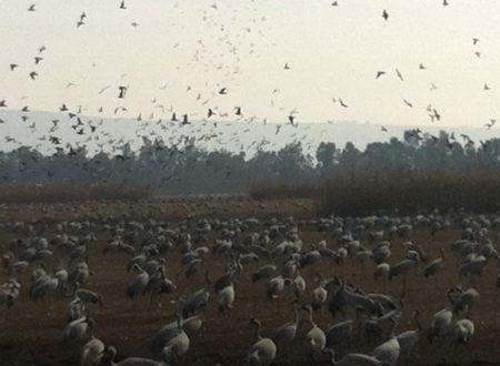 خلفيات وصور طيور مهاجرة (5)