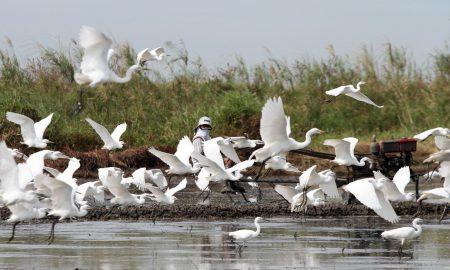 صور الطيور المهاجرة (1)