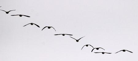 صور تعبر عن هجرة الطيور (1)
