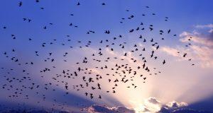 صور تعبر عن هجرة الطيور (3)