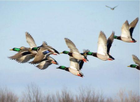صور تعبر عن هجرة الطيور (4)