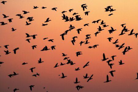 صور جميلة عن هجرة الطيور (2)