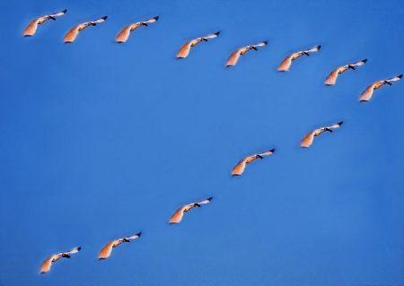 صور جميلة عن هجرة الطيور (3)