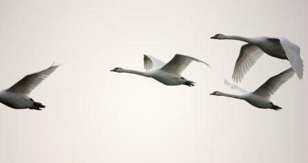 صور رمزية طيور مهاجرة HD (1)