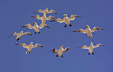 صور رمزية طيور مهاجرة HD (2)