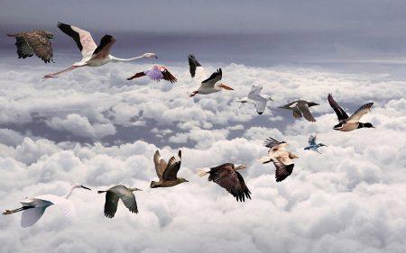 صور سرب طيور (1)