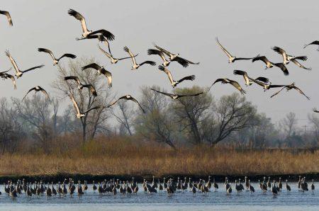 صور سرب طيور (3)