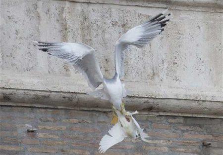 صور طائر النورس (1)