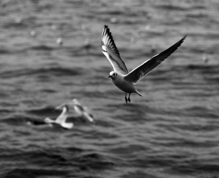 صور طائر النورس (2)