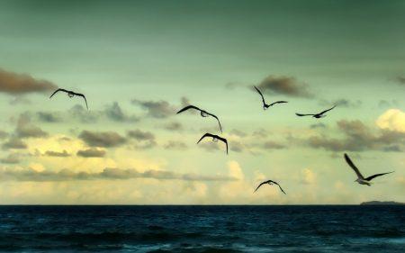 صور طائر النورس (4)