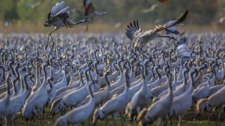 صور طيور مهاجرة (1)