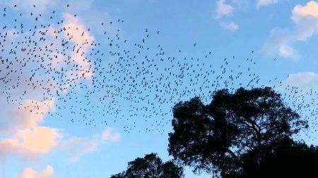 صور طيور مهاجرة (2)
