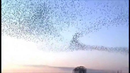 صور طيور مهاجرة (3)
