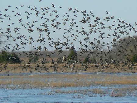 صور طيور مهاجره جميلة جدا (3)