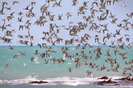 صور عن هجرة الطيور في سرب طيور مهاجرة روعة (1)