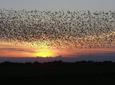 صور عن هجرة الطيور (1)
