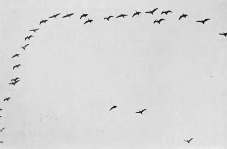 هجرة الطيور بالصور (2)