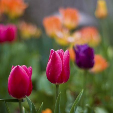 خلفيات عن الربيع (2)