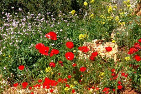 رمزيات ربيع وخلفيات روعة لفصل الربيع (1)