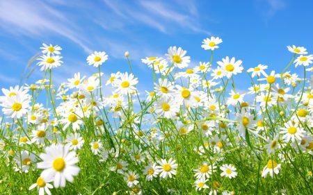 صور الربيع (1)