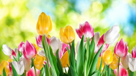 صور الربيع (3)