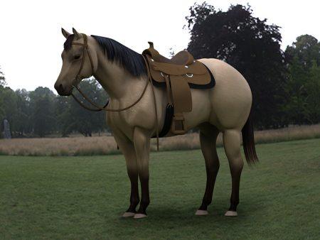 احلي خيول في العالم (1)