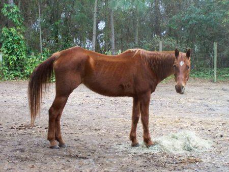 احلي خيول في العالم (2)