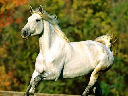 خلفيات خيول 2017 (2)