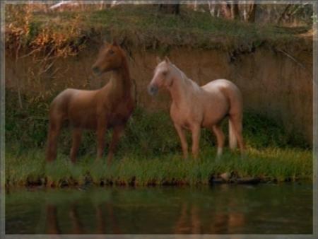 خيول 2017 (1)