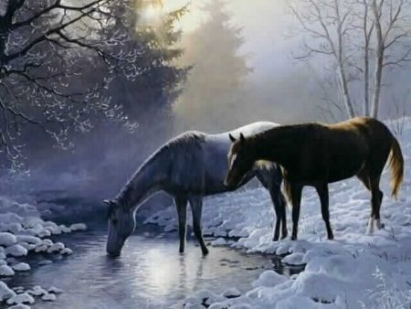 خيول 2017 (2)