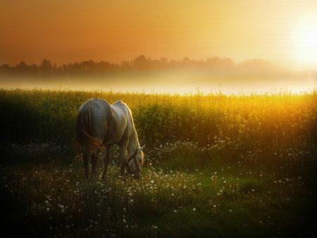 horses (1)