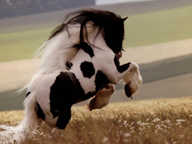 horses (3)