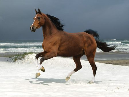 horses photos (3)