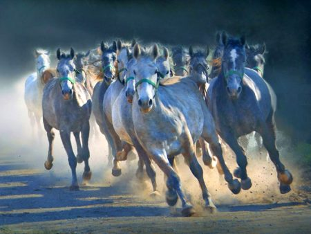 horses wallpapers (1)