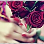 صور ورد جميل