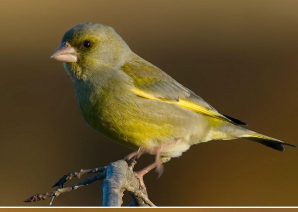 جميع انواع الطيور بالصور ميكساتك