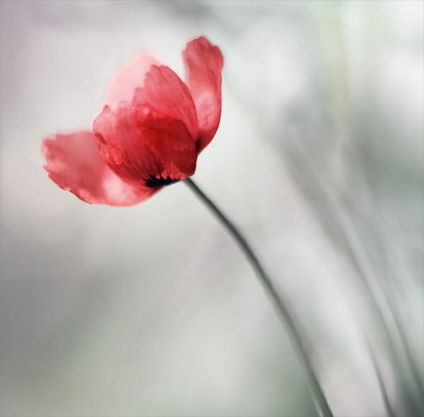 ورد وزهور