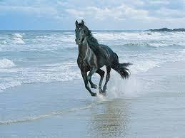 حصان صور