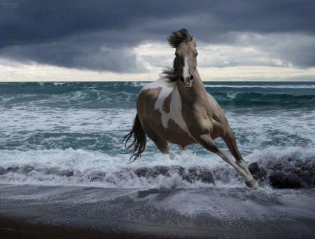 حصان عالمي