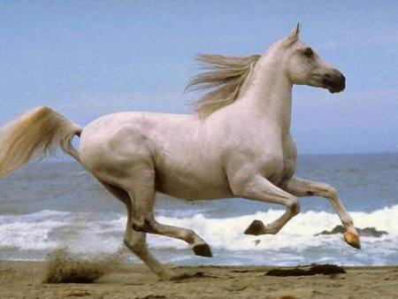 حصان مميز