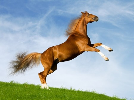 صور حصان جديدة