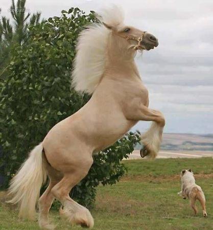 صور حصان دهبي